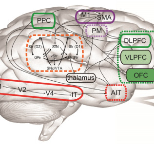 simulated-brain-canadian-diagram