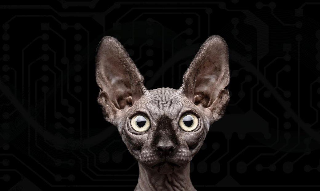 black-bg-cat-sphinx-h
