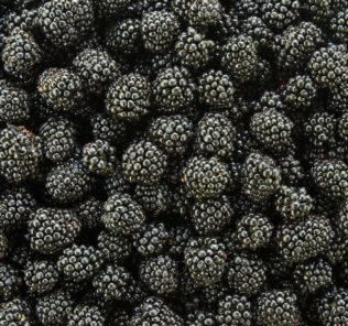 blackberries-h