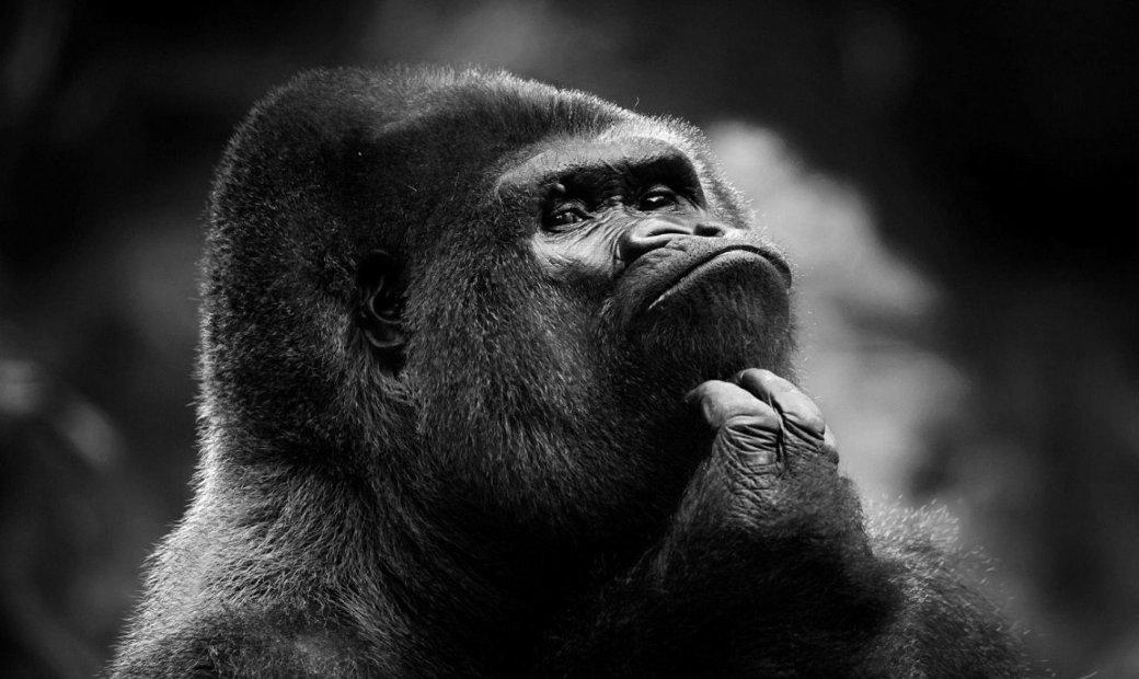 faq-monkey
