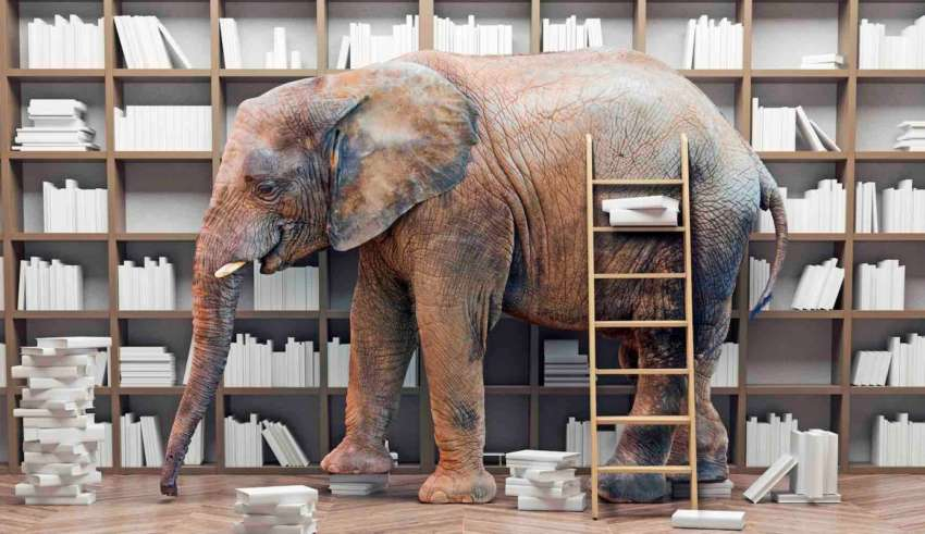 an elephant  in the room with book shelves. Creative concept. Photo combination