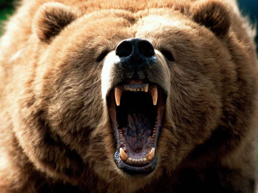 Защита ПК! - Портал Bear-1040x780