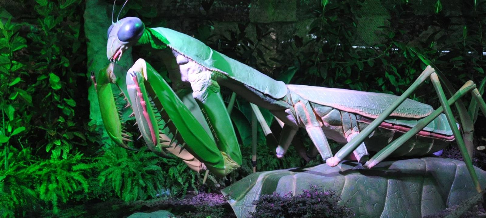 Охота на «Богомола». Читаем локальные файлы и получаем права админа в Mantis Bug Tracker
